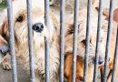 NO SE PUEDE SEGUIR TRATANDO A LOS ANIMALES COMO COSAS!